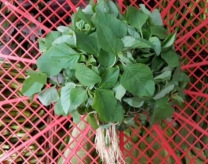 簕莧菜(嫩) amaranth