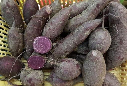 番薯(紫色)  Sweet potato