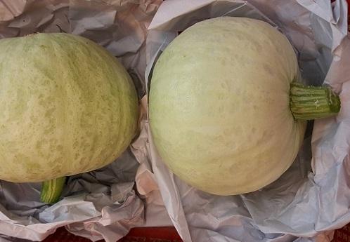 小南瓜(白皮黃肉/嫩) Pumpkin